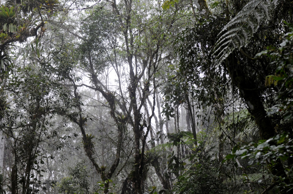 Atlantic Rainforest, São Paulo