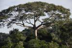 Amazon Rainforest, Pará